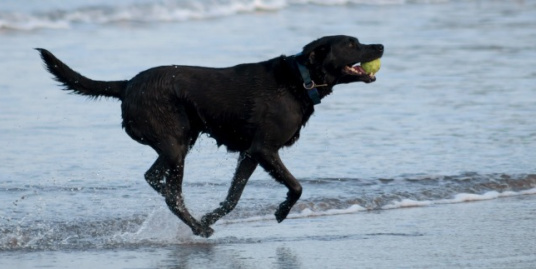 MJ supports Guide Dogs Cymru
