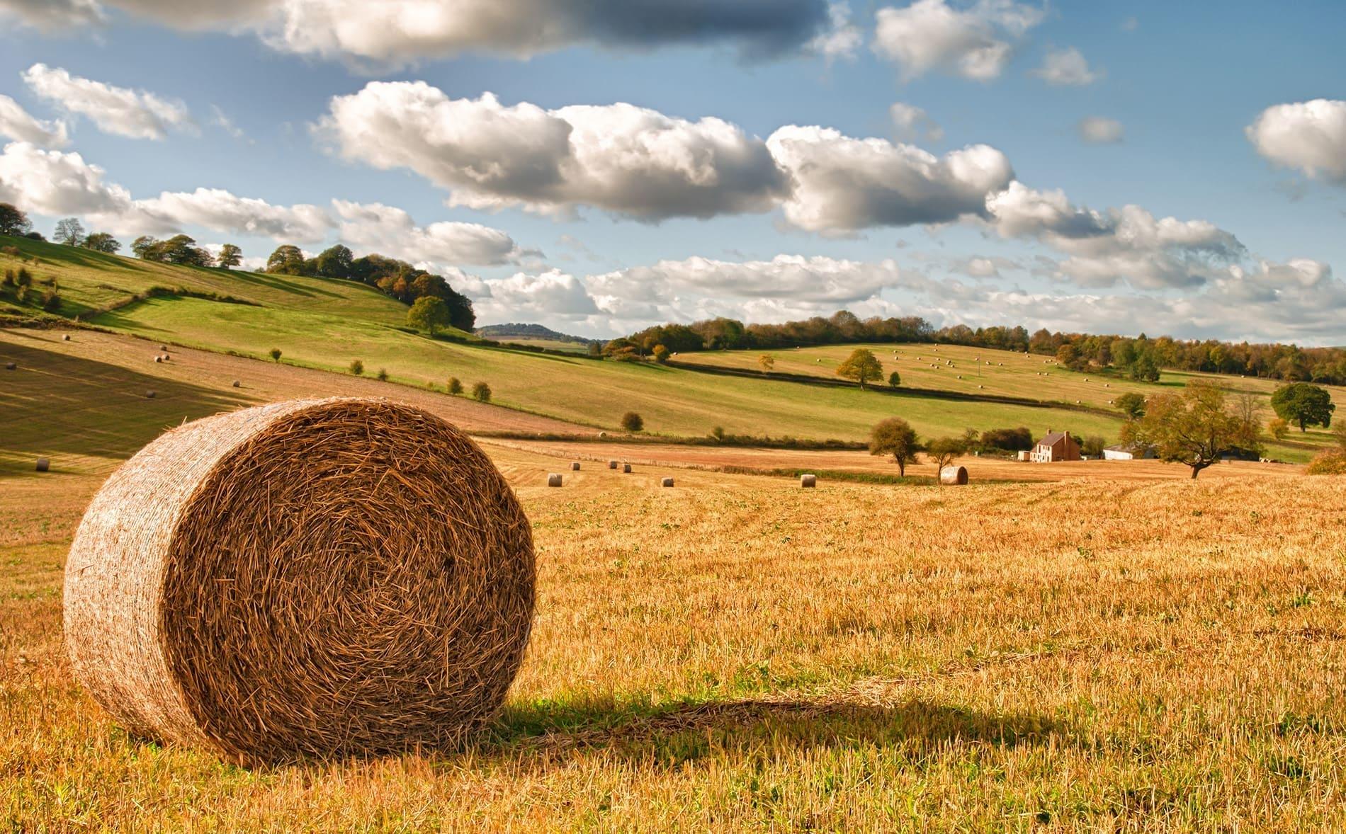 McCartneys Agriculture grass keep