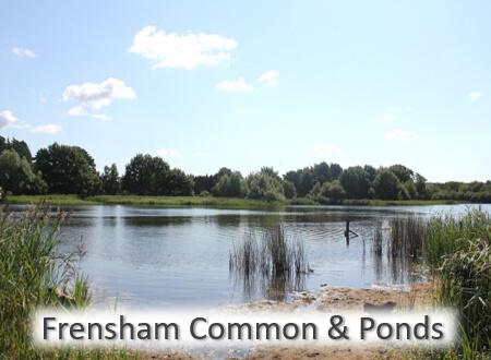 12 Great Local Places - Frensham Common & Ponds