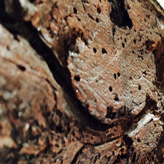Woodworm Leaflet